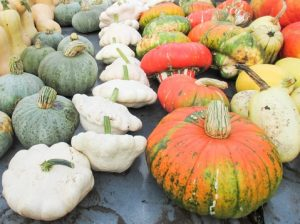 assortment of gords and pumpkins