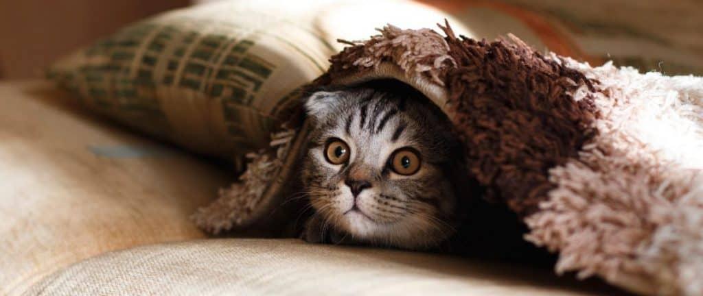 Cute Cat Under Blanket