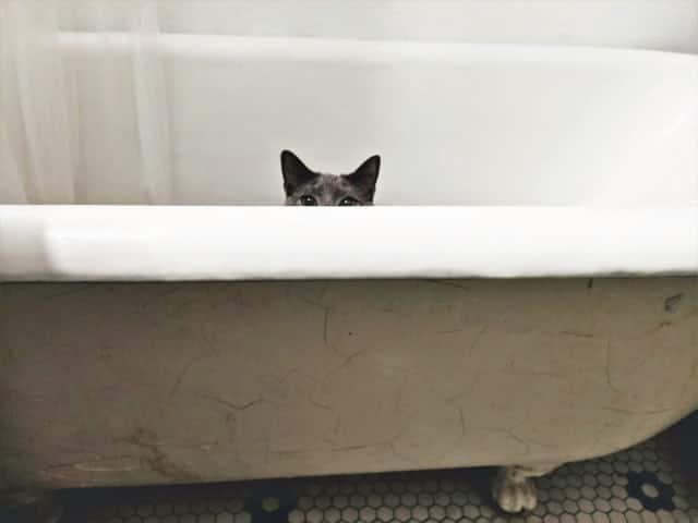 claw-foot farmhouse bathtub