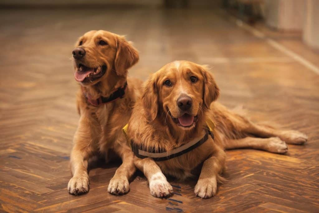 What's the Best Flooring for Dogs?