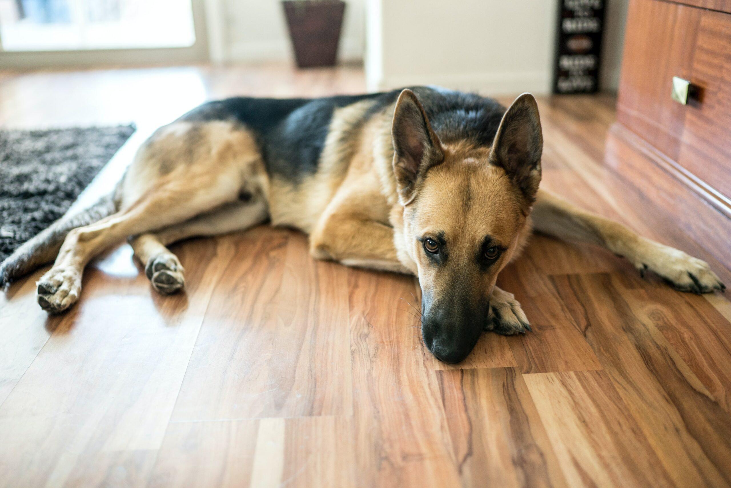 Good Flooring For Dogs